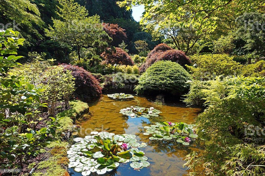 pond – Foto