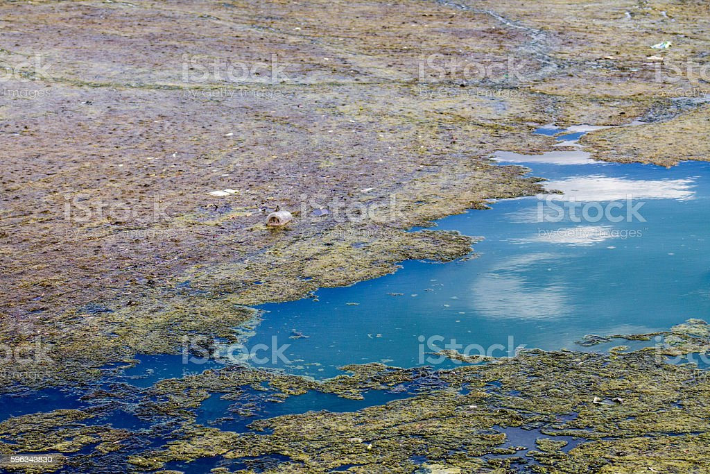 Pond Pollution royalty-free stock photo