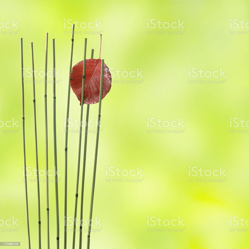 Pond Reeds and Autumn Leaf royalty-free stock photo
