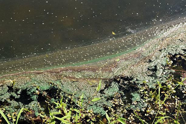 Pond Scum stock photo