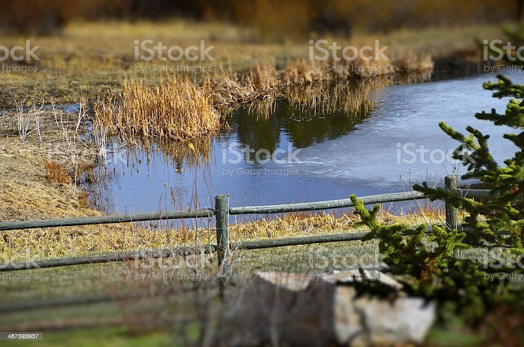 Pond thaw stock photo