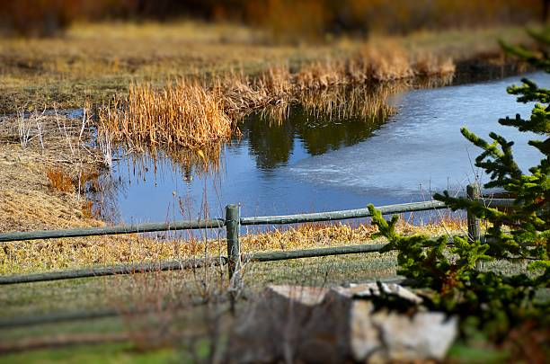 Pond thaw stock photo