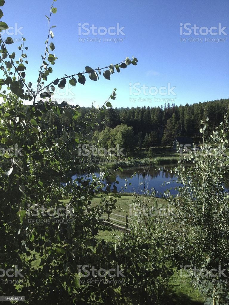 Pond through the aspen leaves stock photo