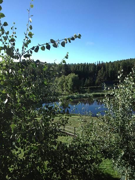 Pond through the aspen leaves stock photo