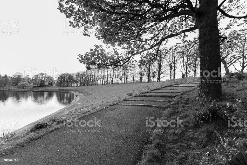 Pond, tree and footpath, Inverleith Park, Edinburgh, Scotland in monochrome royalty-free stock photo