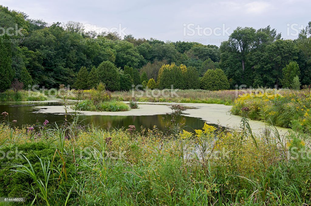 Pond Wetlands and Forest in Chaska stock photo