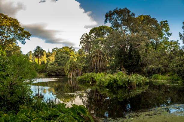 Ein Teich mit schönen Bäumen im botanischen Garten in Melbourne, Australien an einem bewölkten Tag im Sommer. – Foto