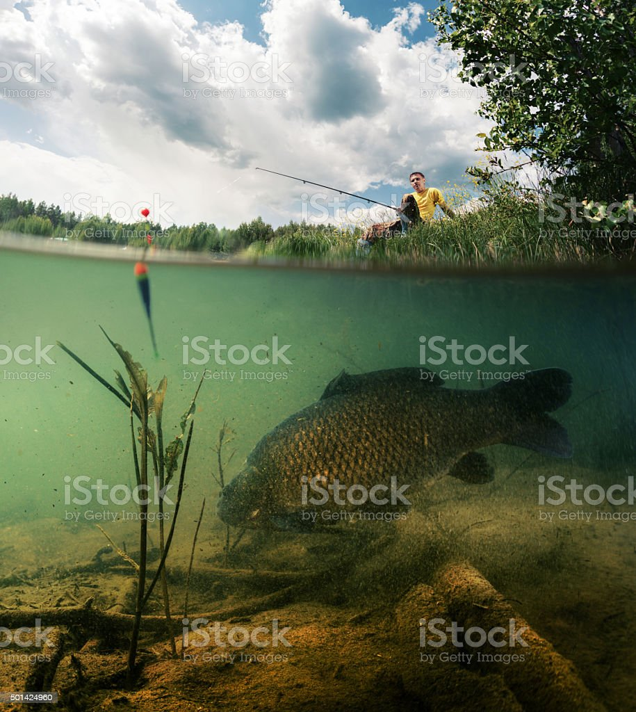 Pond with carp stock photo