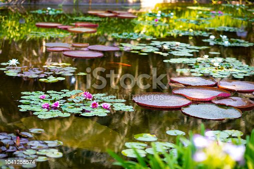 Pond with lily pads and flowers.