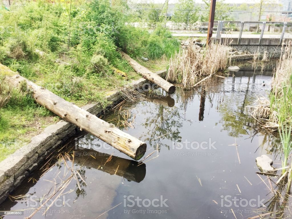 Pond with trees and grass stock photo