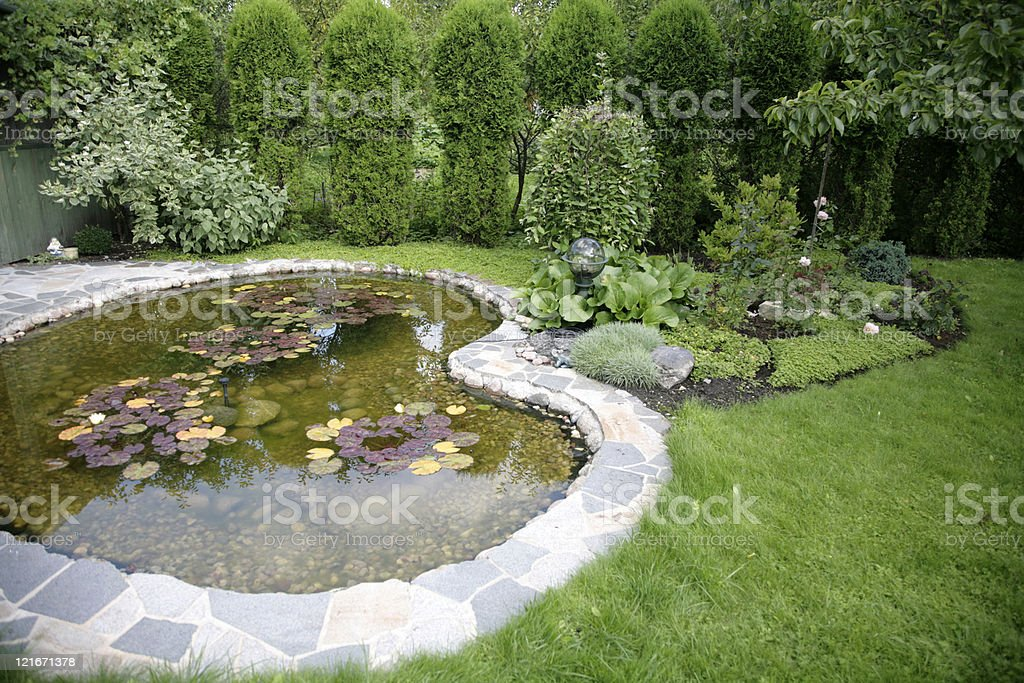 pond with water-lilys in a yard at home stock photo
