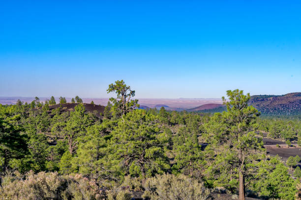 Ponderosa pine forest in Sunset Crater Volcano National Monument stock photo