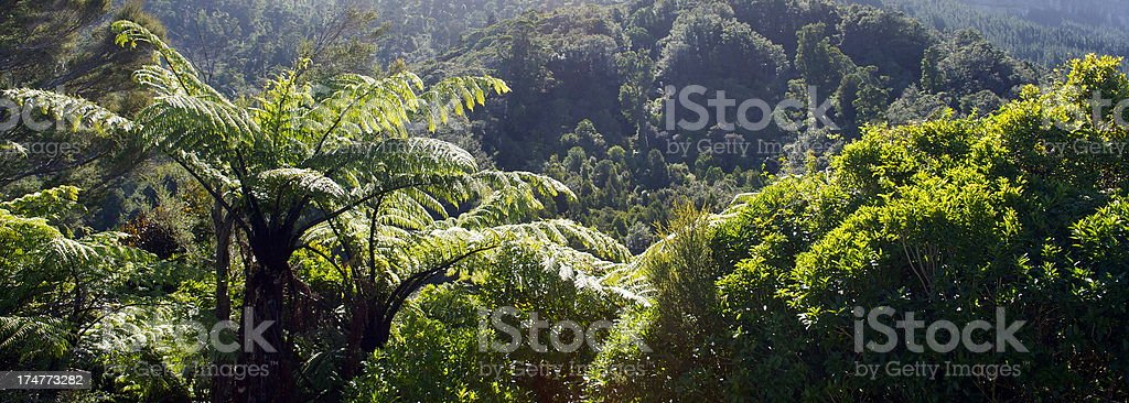 Ponga Ferns and New Zealand Native Flora royalty-free stock photo