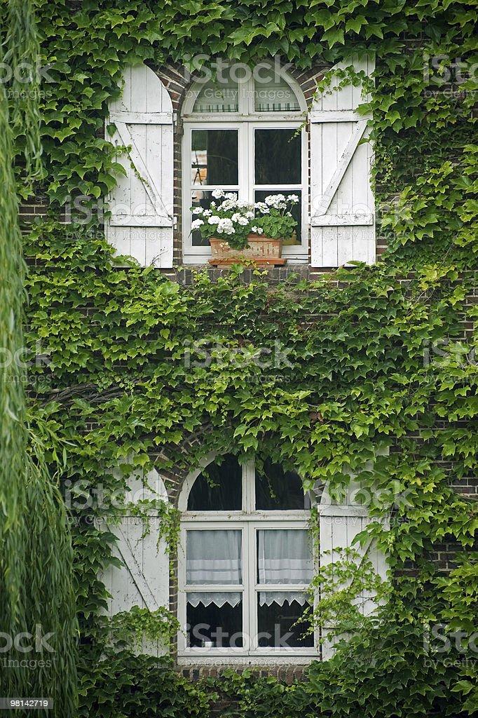 퐁-Tranchefetu (프랑스)-windows, 덩굴 royalty-free 스톡 사진