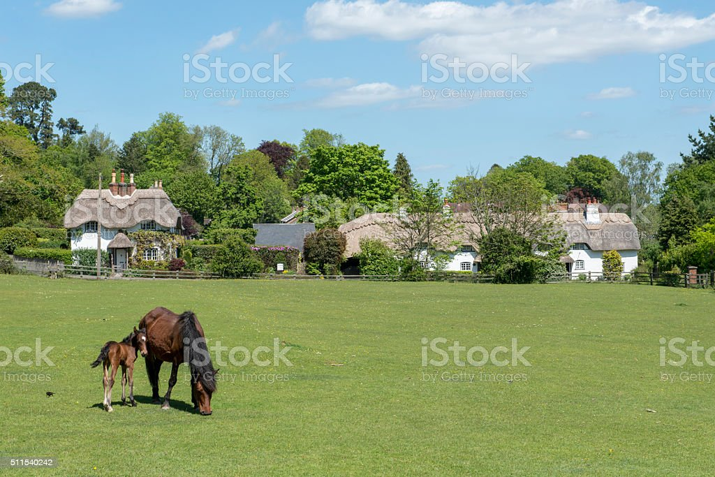 Pony and Foal at Swan Green, Emery Down, New Forest stock photo