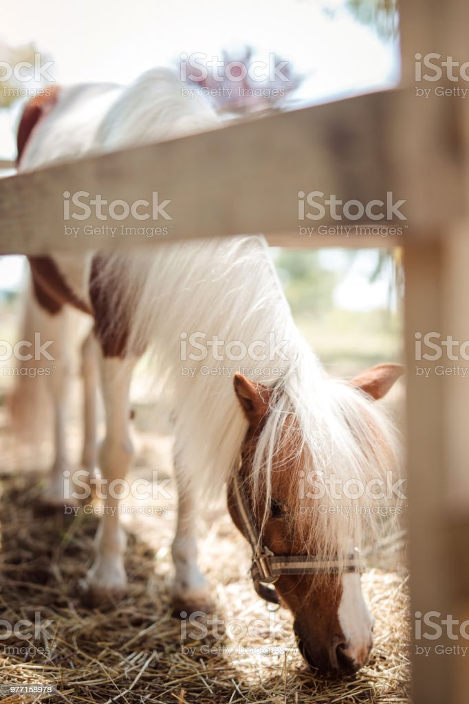 Pony behind wooden fence stock photo
