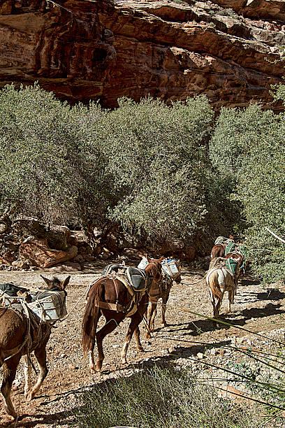 Pony Express stock photo