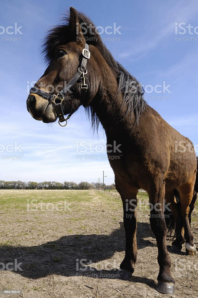 Pony in profile royalty-free stock photo