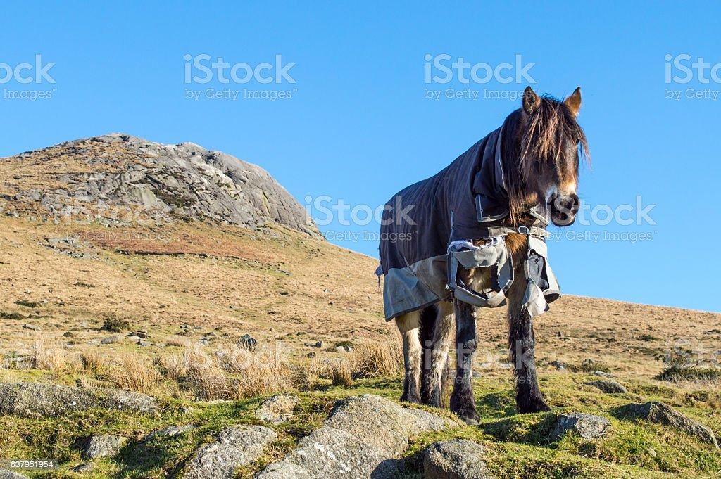 Pony in tattered coat on hillside stock photo