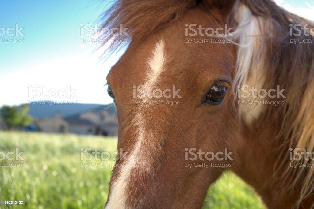 Pony looking into camera royaltyfri bildbanksbilder