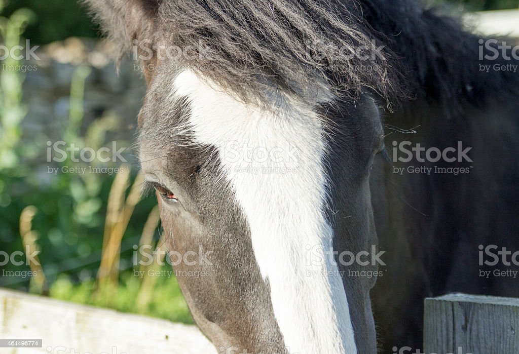 Pony Looking over a Fence stock photo