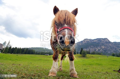 Pony on the Dolimite - Italy