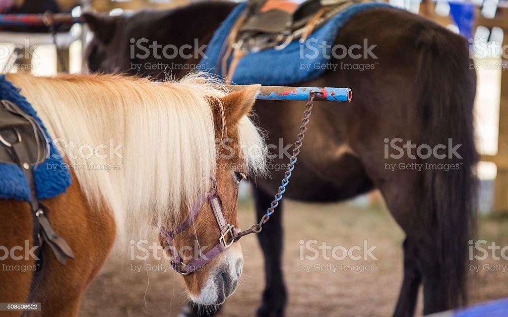 pony rides at a fair stock photo