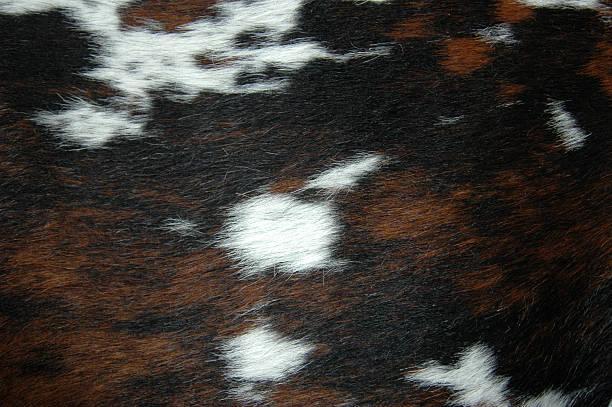 Ponyfellfur picture id90391443?b=1&k=6&m=90391443&s=612x612&w=0&h=bmqtuyn7h2v9j4swg2rqiuclodcbmauk6o9we9cd9mg=