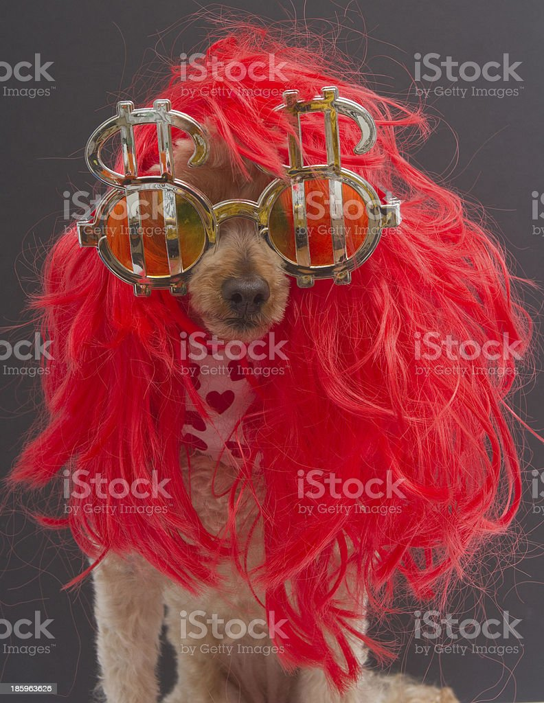 Poodle In Red Wig and Dollar Signs royalty-free stock photo
