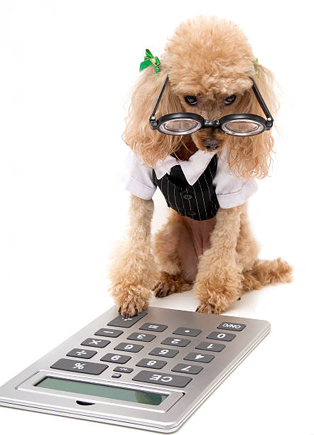 Image result for dog with calculator""
