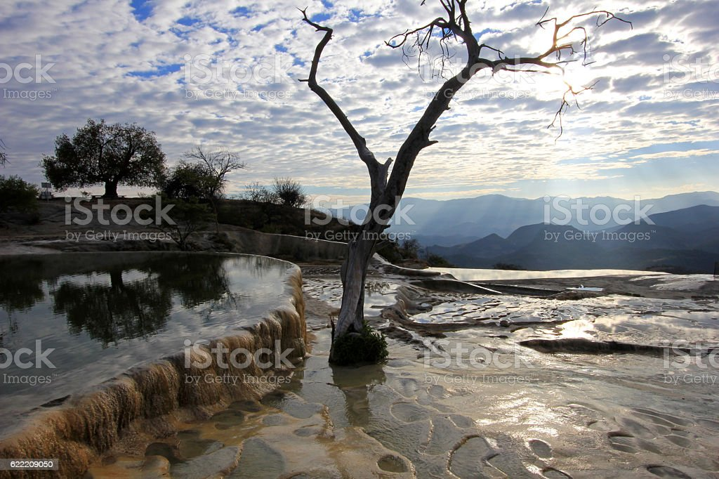 Pool and tree at petrified waterfalls, Hierve El Agua, Mexico stock photo