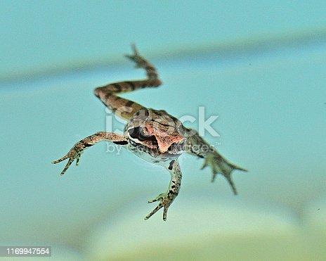 Little Leap Frog in motion