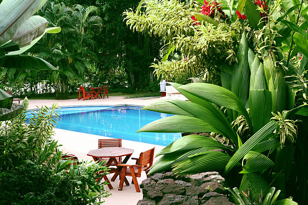 Pool in tropical setting  backyard pool stock pictures, royalty-free photos & images