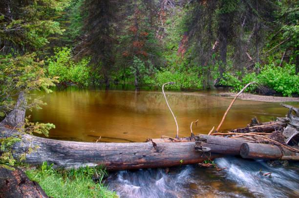Plas water in het bos foto
