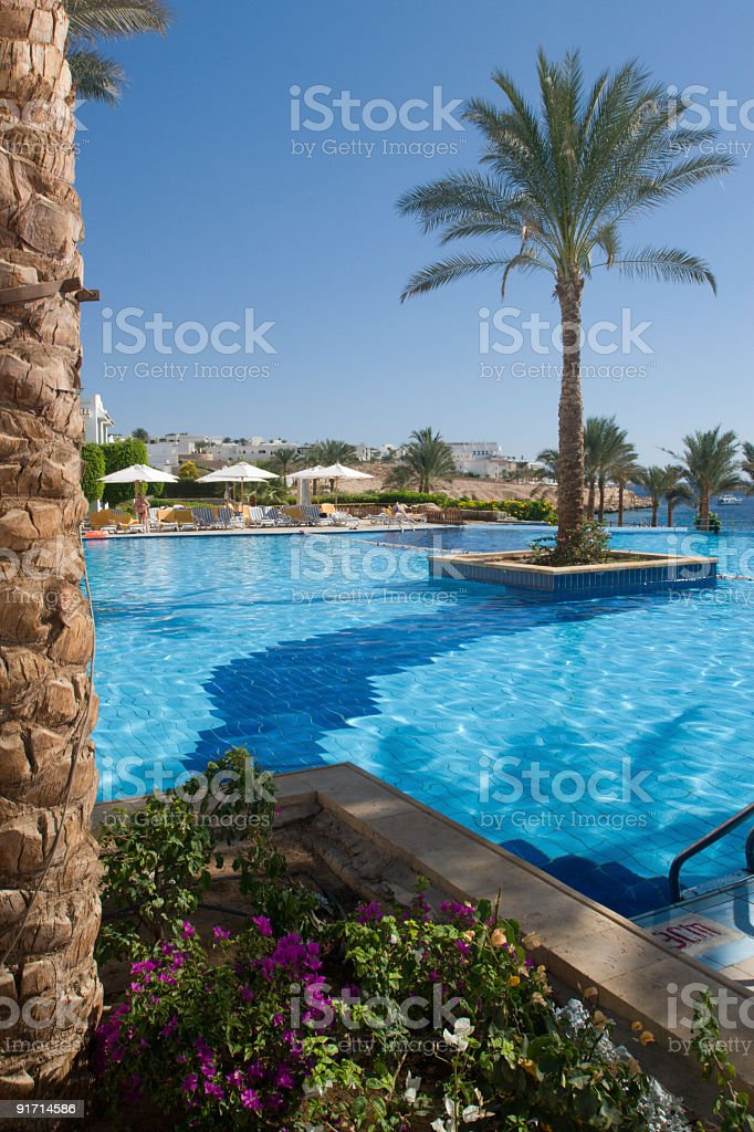 Pool with palm tree. royalty-free stock photo