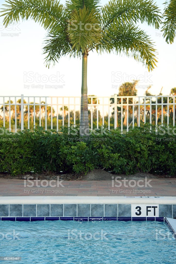 Poolside with palm tree royalty-free stock photo