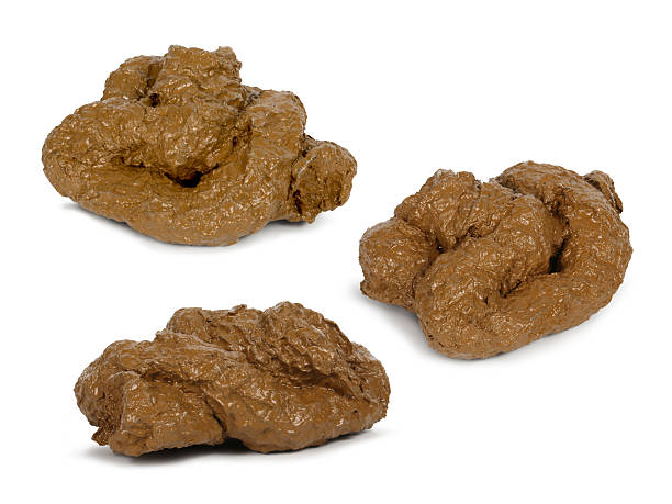 poop poop isolated poop stock pictures, royalty-free photos & images
