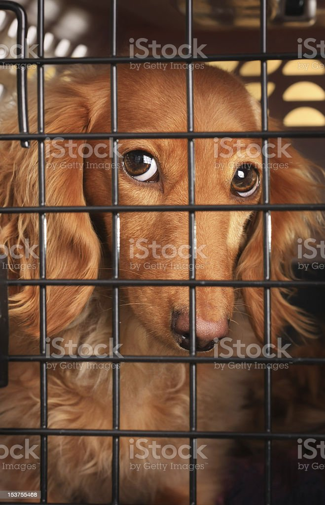 A poor brown dog in his tiny metal cage royalty-free stock photo