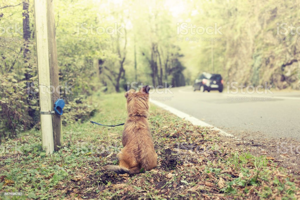 poor dog abandoned on the street by bad owner stock photo