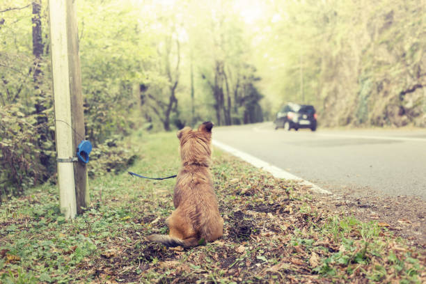 poor dog abandoned on the street by bad owner - dilapidated stock pictures, royalty-free photos & images