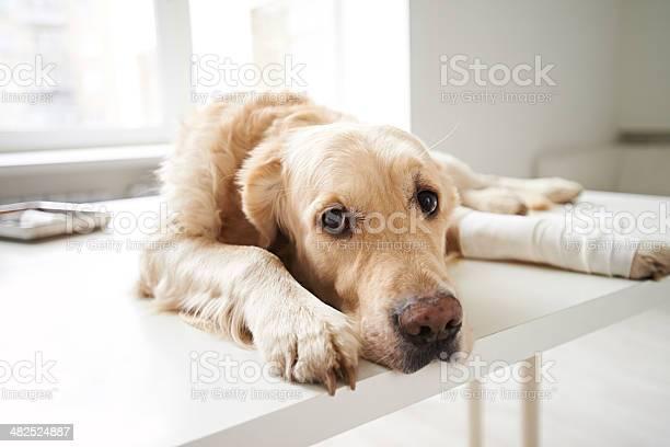 Poor doggie picture id482524887?b=1&k=6&m=482524887&s=612x612&h=17fvg xqmhdeikkpk6q0uncd3eljww3w cp 2lyc1iq=