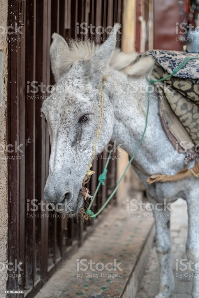 A poor donkey is used to transfer goods inside the City of Fes, Morocco stock photo