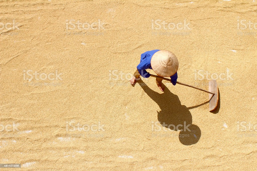 Poor farmer dry rice after harvesting stock photo