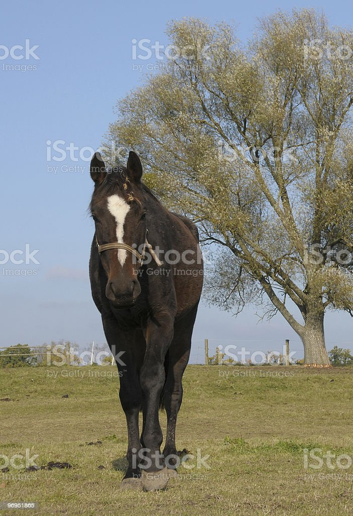 poor horse royalty-free stock photo