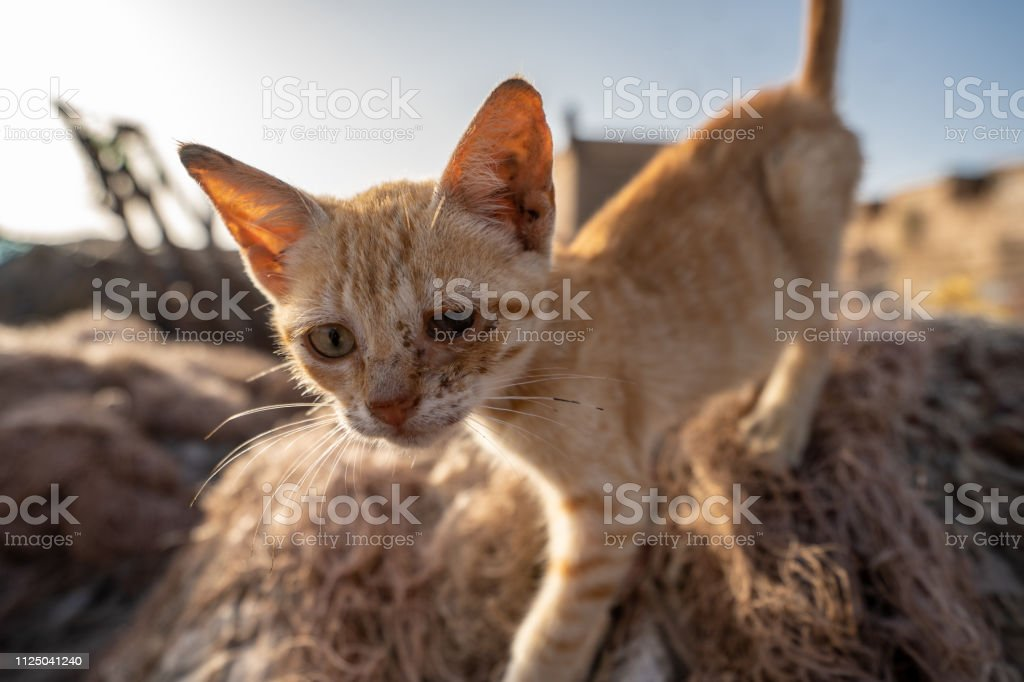 A poor little cat with an infected eye at the harbor of Essaouira, Morocco stock photo