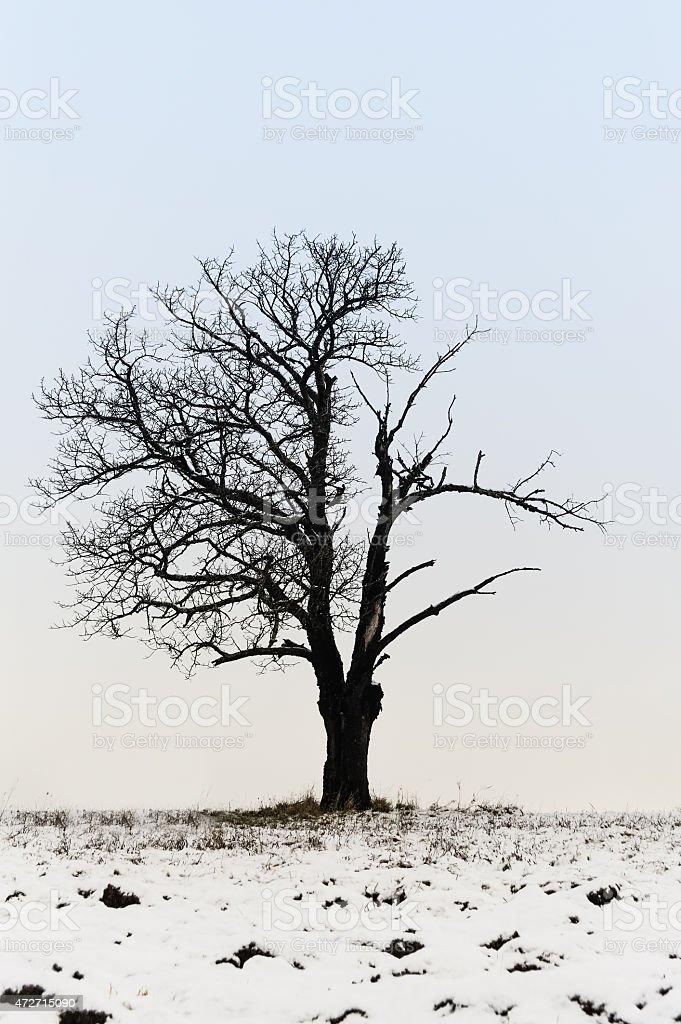 Poor tree in winter stock photo