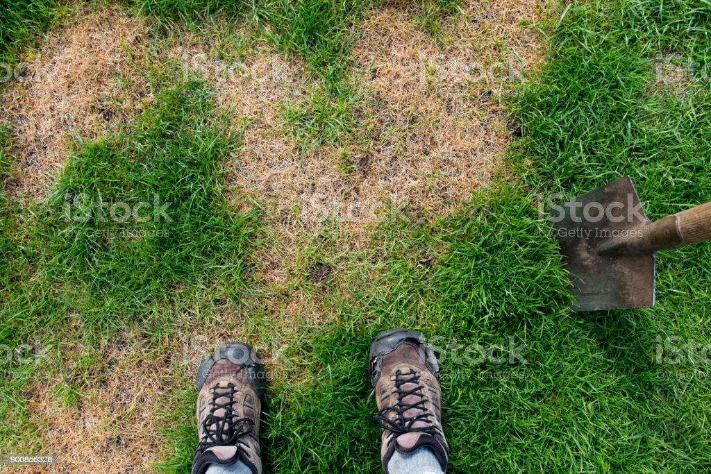Schlechter Rasen – Foto