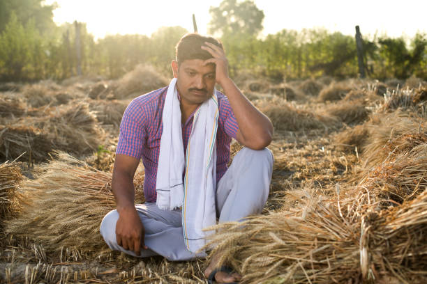 Poor worried farmer sitting on agriculture field stock photo