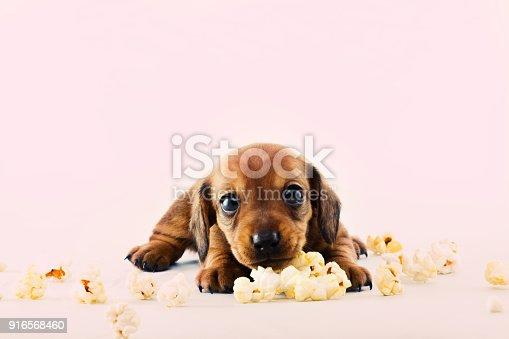 istock pop Corn Dog 916568460