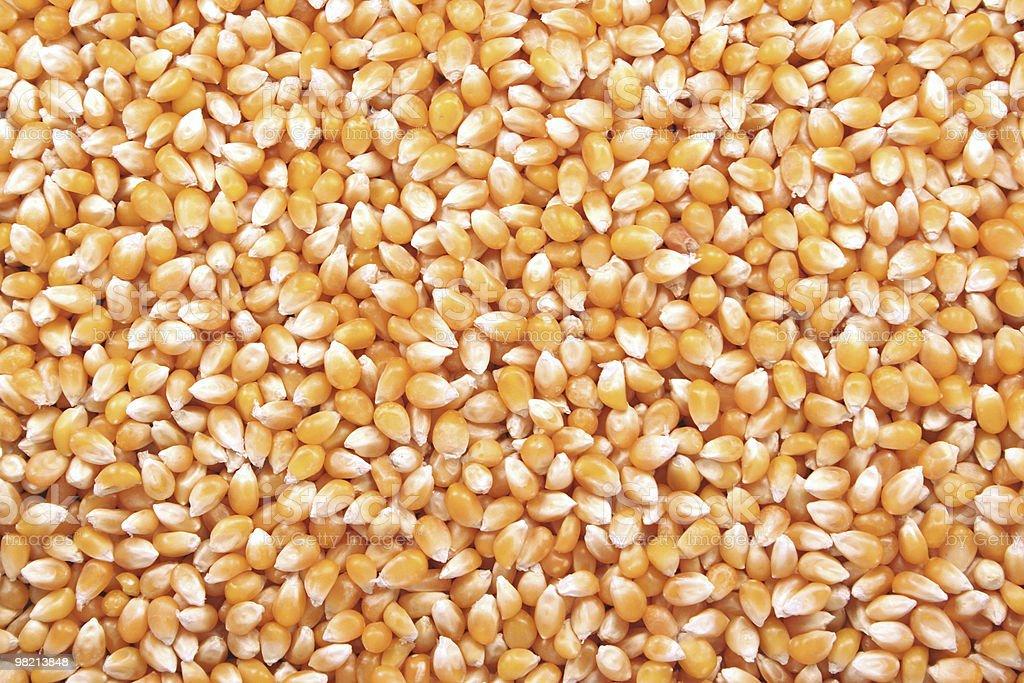 Popcorn Kernels royalty-free stock photo